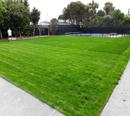 First mow – sown lawn