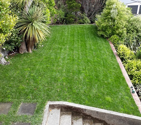 Killed off lawn – ground preparation