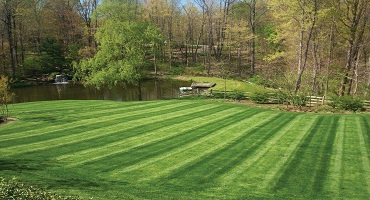 Instant Lawn Laying